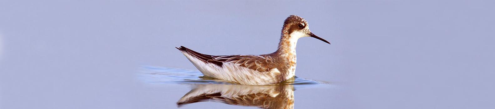 Iran Bird Watching